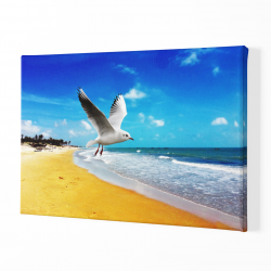 Чайка на плажа